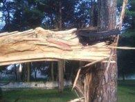 Негода на Волині знову валить дерева