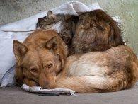 На Волині вимагали припинити жорстоке поводження з тваринами