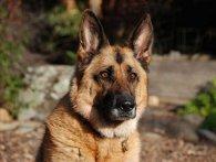 На Одещині жінка повісила собаку