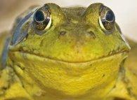 Археологи знайшли консерви з обезголовлених жаб