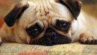 У Італії жінка добилася лікарняного по догляду за… собакою