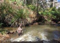 Нова зірка соцмереж: кенгуру-спортсмен