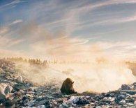Фотограф із Канади поділився сумним фото ведмедя на смітнику