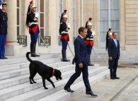 Напісявши біля каміну, собака французького президента перервала важливу зустріч (відео)
