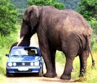 Слон на смерть затоптав туристів