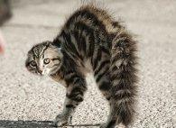 Кіт напав на літню жінку: через травми і шок вона перестала розмовляти