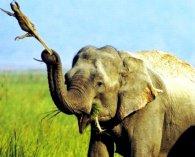 Слониха вбила та закопала господаря
