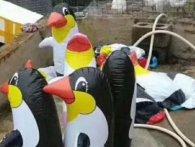Схитрили: замість екзотичних тварин у зоопарку «жили» надувні пінгвіни