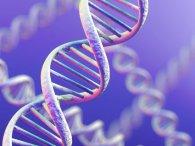 Відмінність гетеро і гомосексуальних чоловіків полягає у генах