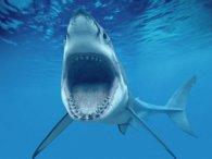 Дитині дивом вдалося врятуватися від чотирьох акул (відео)