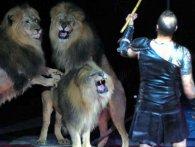 Хижаки роздерли циркового коня (відео)