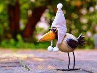 Ворона мріє стати зіркою телебачення (відео)