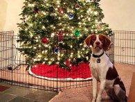 Собаки зі США вимагали повернути Різдво (відео)