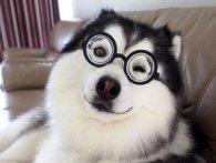 Кумедна дружба собаки та свині смішить публіку (відео)