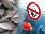 Де заборонено і дозволено рибалити під час нересту