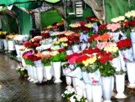 Квітковий ринок остаточно переїхав зі скверу в центрі Луцька (фото)