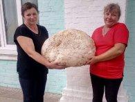 Гриб-гігант: велетенська порхавка заважила 17 кіло