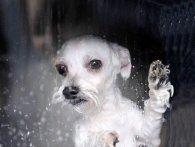 Щоб здобути популярність в Instagram, аргентинка випрала собаку в машинці (відео)