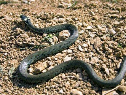 На Львівщині від укусу змії померла дитина