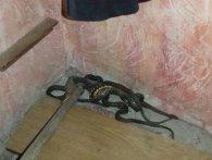 У Херсоні в житловому будинку виявили кубло гігантських змій
