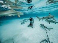 Від поліцейських ховався у річці з тупорилими акулами