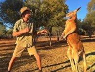 Помер Арнольд Шварценеггер у світі кенгуру (відео)