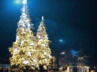 Луцькі ялинки увійшли в п'ятірку найкрасивіших новорічних красунь України