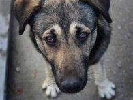 У Києві загнали в сіті живодера: відстрілював собак із вікна авто (відео)