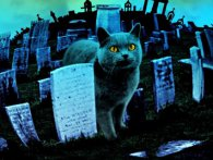 У Києві облаштують «легальне» кладовище домашніх тварин
