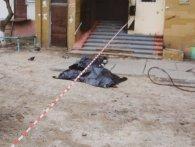 З вікна київської багатоповерхівки випав боєць Нацгвардії (фото)