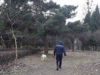 У Луцьку карають собачників (фото)