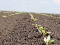 Аграрії Волині реалізували за рік власної продукції на майже 8 мільярдів гривень