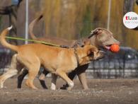 «Собаче діло»: показали, де у Луцьку вигулювати чотирилапого улюбленця (відео)