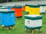 У пасічника зі Львівщини вкрали бджіл на 120 тисяч гривень