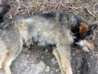 Догхантер: у Кривому Розі чоловік нахромив пса на вила і кинув у багаття (фото, відео)