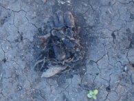 Лишилася тільки ступня: показали останки солдата, який не вийшов з Іловайського котла (18+)