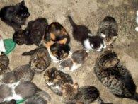 «Психічно хвора»: у Миколаєві мати-одиначка білувала собак і котів (фото)