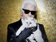 Кішка Лагерфельда запускає власну колекцію (відео)