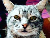 На Волині підстрелили кота – цілились у голову