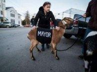 Почесним мером у США вибрали козла (фото)
