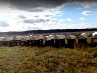«Нестругані дошки»: показали масовий похорон вояк із РФ, загиблих у Сирії та Україні (відео)