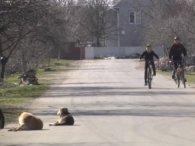 Дитина пролетіла 10 метрів: подробиці смертельної аварії в Луцьку (відео)