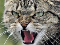 На Львівщині скажений кіт покусав дорослих і дитину