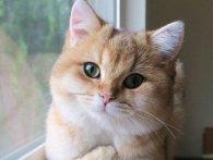ТОП-3 кумедних відео про котиків
