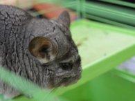 У Львові з еколого-натуралістичного центру викрали тварин