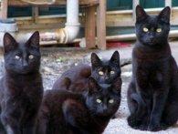 Стара москвичка жила в квартирі із 60 чорними котами (відео)