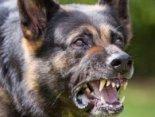 Безпритульність: в Україні собаки атакують людей (відео)