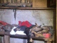 У господарській споруді на Рівненщині виявили сімох мертвих цуценят (відео)