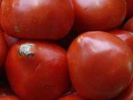 В Україну намагалися завести майже 40 тонн заражених помідорів