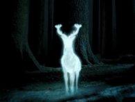 «Патронус»: у США сфотографували примарного оленя-альбіноса